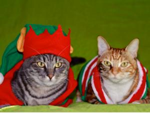 Christmas cat sweater
